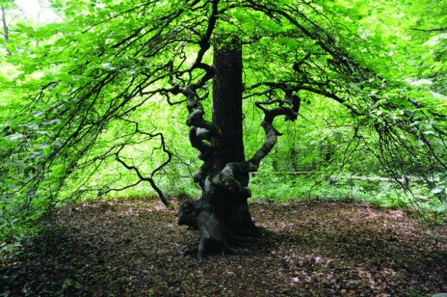 Découvrez la forêt enchantée de Verzy