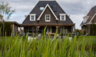 Invités indésirables : Comment se débarrasser des insectes dans votre maison 3