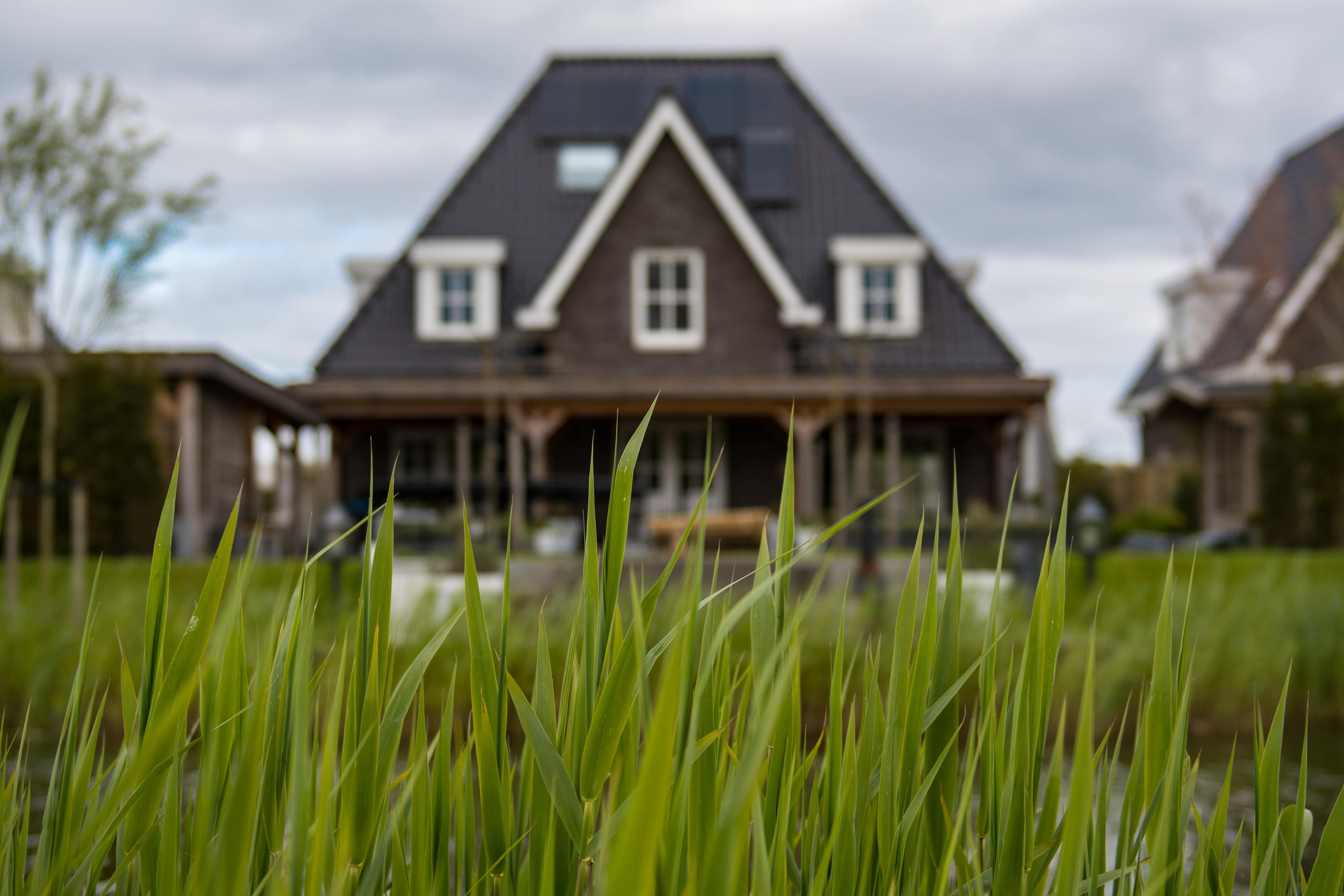 Invités indésirables : Comment se débarrasser des insectes dans votre maison 1