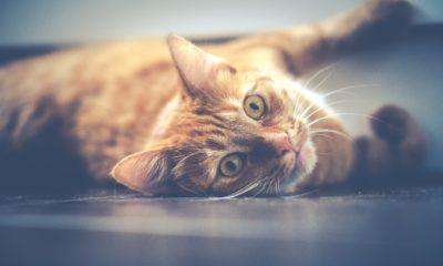 Les 10 meilleures litières pour chats en 2020 56