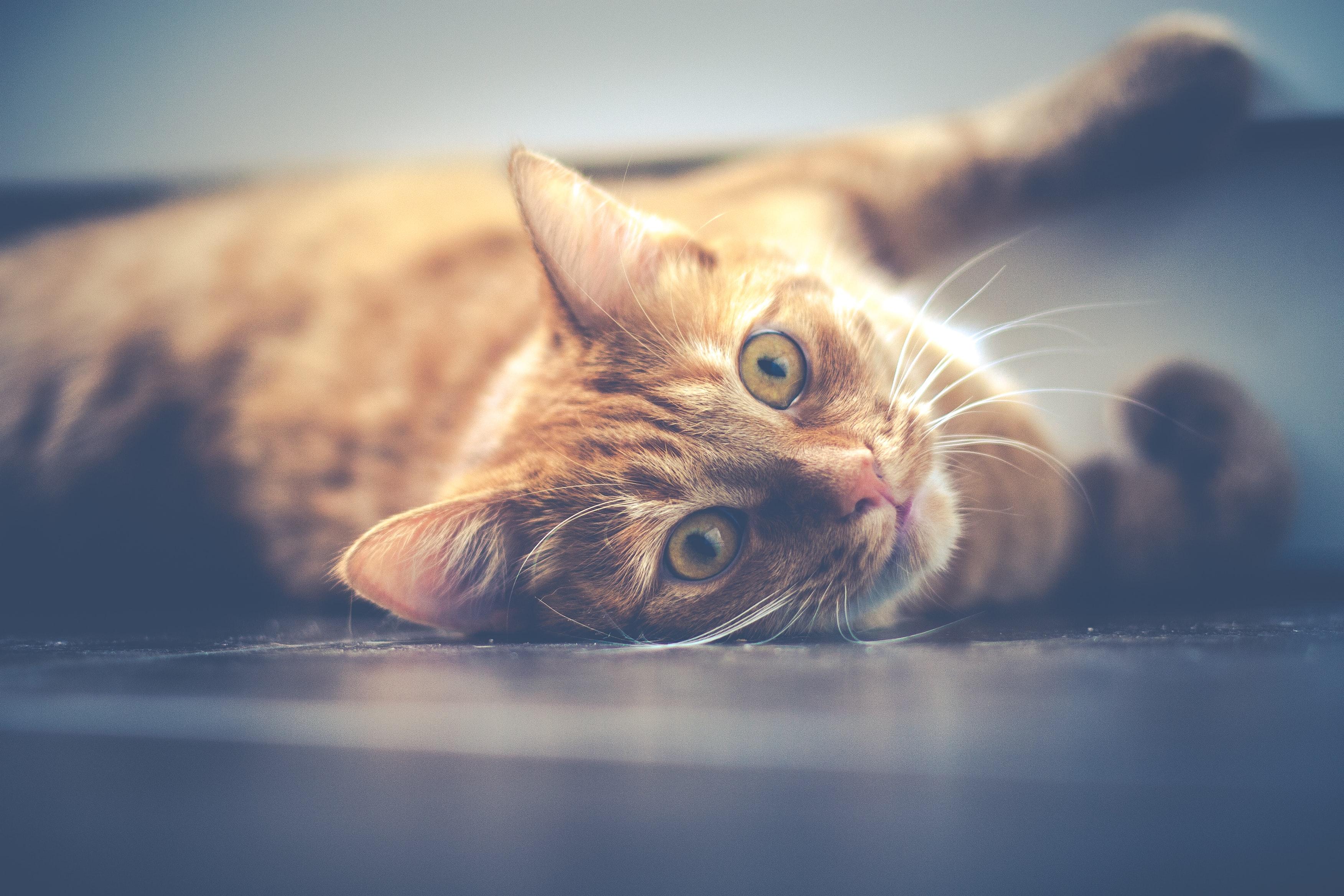 Les 10 meilleures litières pour chats en 2020 1