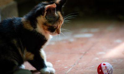 Guide pour trouver les meilleurs jouets pour chats 52