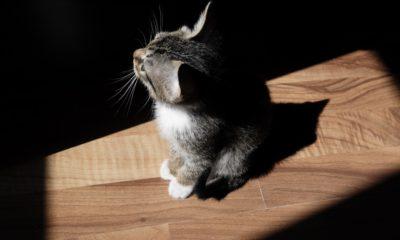Guide d'achat du meilleur arbre a chat en 2019 49