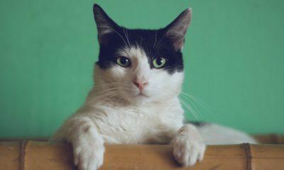 10 meilleurs distributeurs automatiques de croquettes pour chats en 2020 54