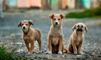 5 conseils pour choisir la meilleure assurance pour votre chien 32