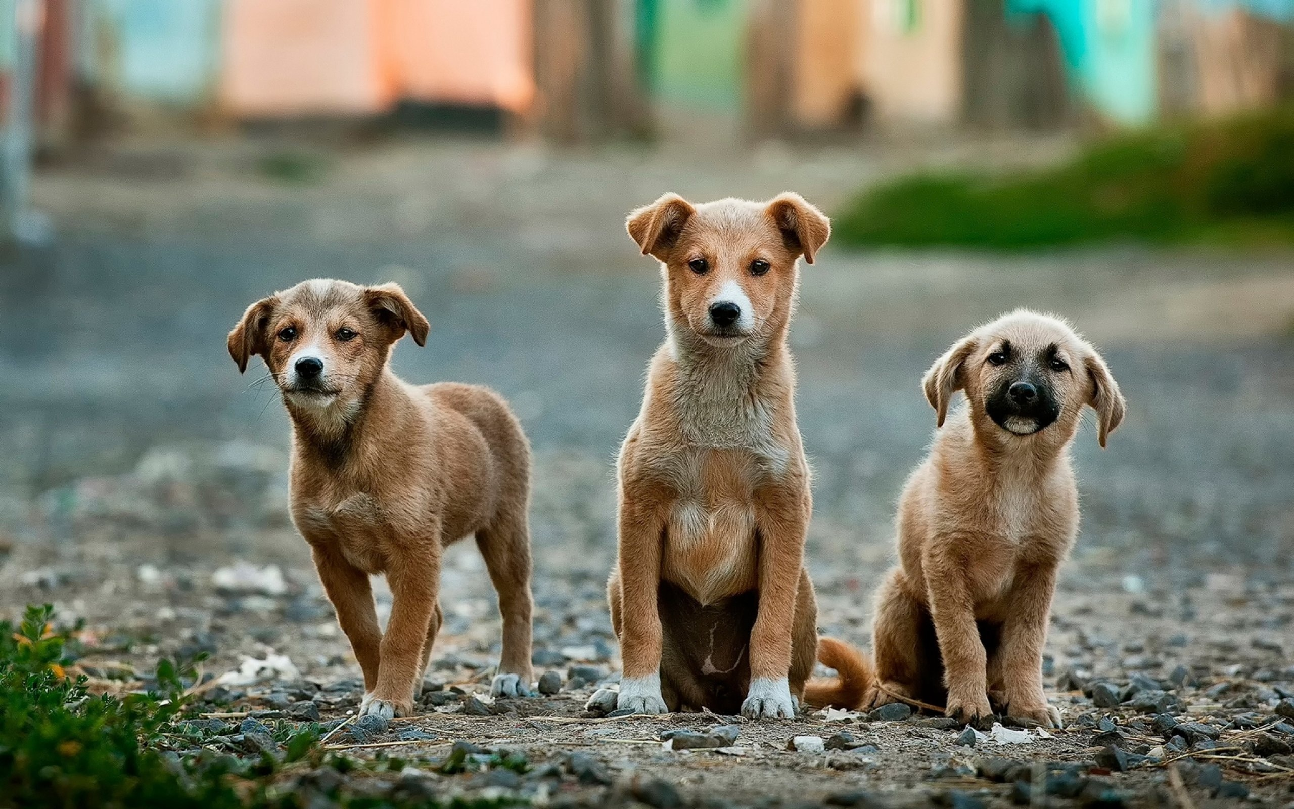 5 conseils pour choisir la meilleure assurance pour votre chien 1