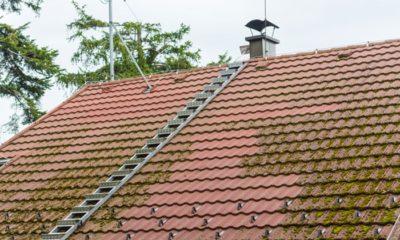 Pourquoi procéder au démoussage de la toiture? 37