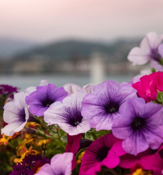 Pourquoi faire appel à une entreprise de vente de bacs de fleurissement pour votre projet d'aménagement paysager ? 1