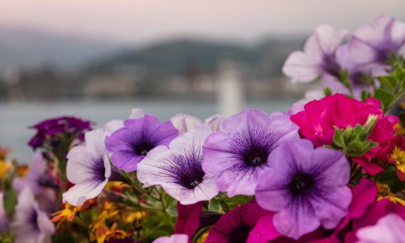 Pourquoi faire appel à une entreprise de vente de bacs de fleurissement pour votre projet d'aménagement paysager ? 4