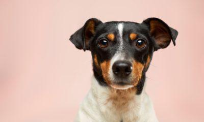 Assurance pour chien, pourquoi et comment choisir? 44