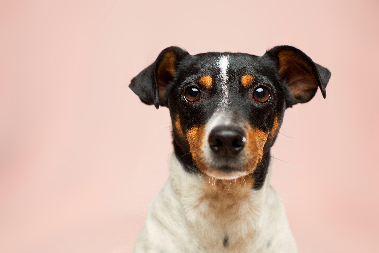 Assurance pour chien, pourquoi et comment choisir? 1