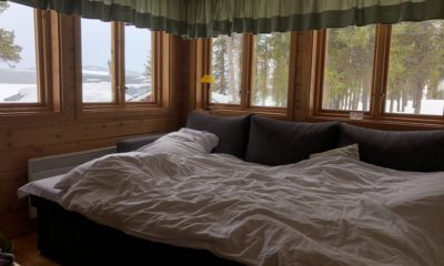 Punaise de lit : comment s'en débarrasser ? 48