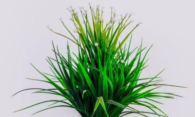 Ou acheter un palmier artificiel ? 6