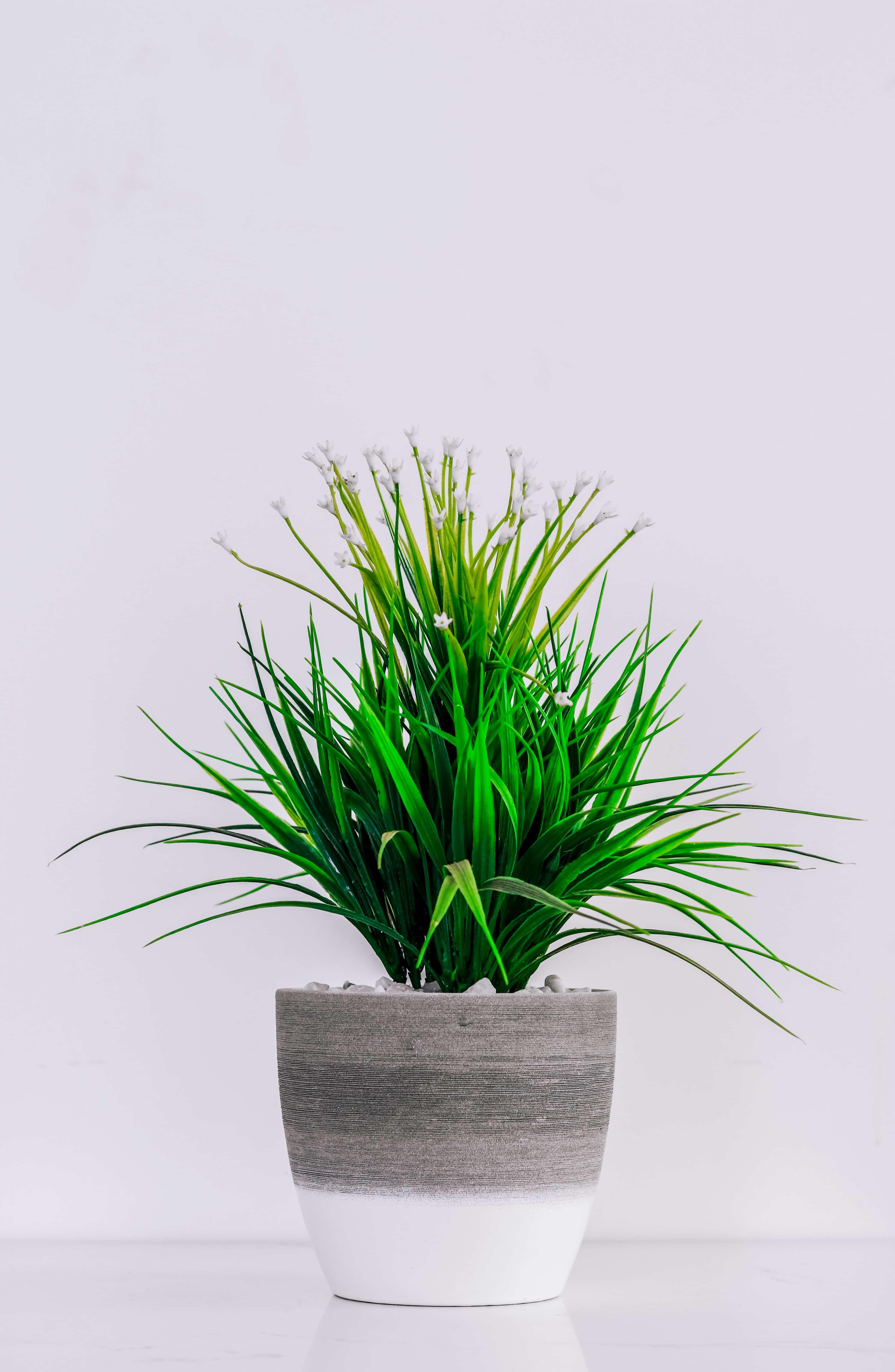 Ou acheter un palmier artificiel ? 1