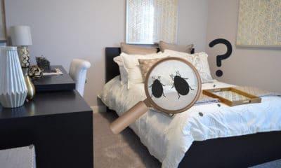 Comment se débarrasser complètement des punaises de lit? 6