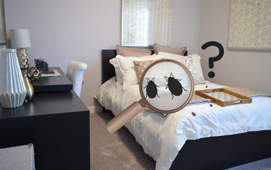 Comment se débarrasser complètement des punaises de lit? 3