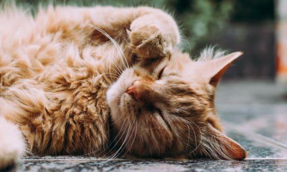 Arrivée d'un chaton : Comment bien le nourrir tout au long de sa vie ? 4
