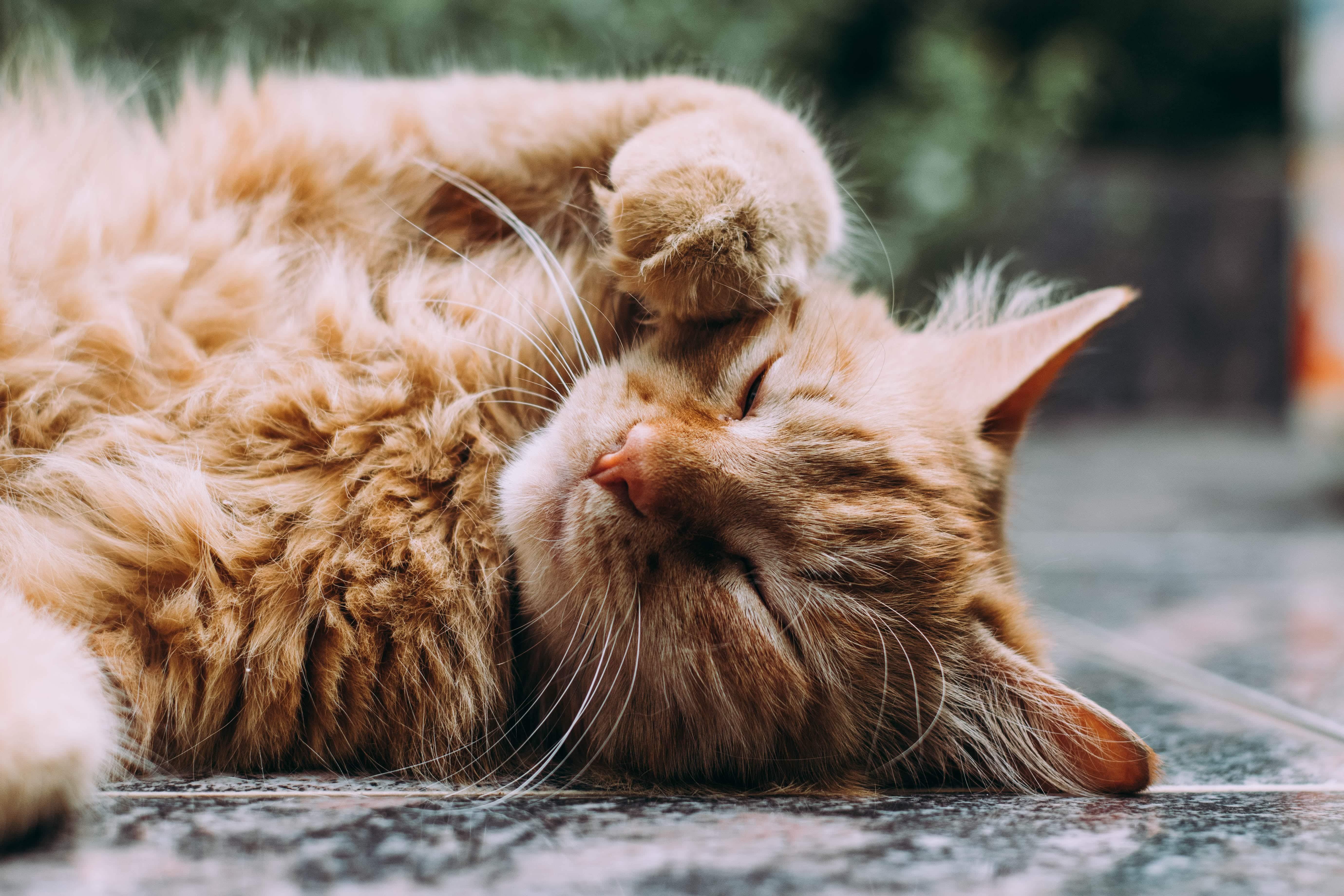 Arrivée d'un chaton : Comment bien le nourrir tout au long de sa vie ? 1